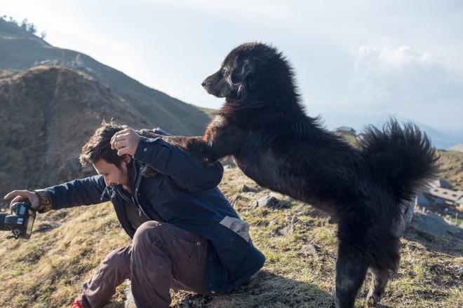 Dog climbs Ankit